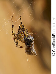 No way out! - A prey captured by spider.