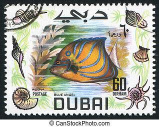 fish Blue angel - DUBAI - CIRCA 1969: stamp printed by...