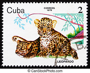 Postage stamp Cuba 1979 Leopards, ZOO Animals