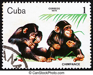 Postage stamp Cuba 1979 Chimpanzee, ZOO Animals