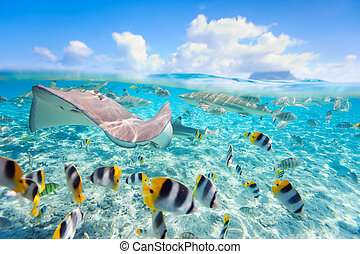 Bora Bora underwater - Colorful fish, stingray and black...