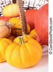 abundance of pumpkin
