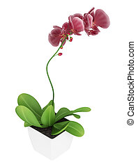 Purple phalaenopsis orchid - Beautiful spike of flowering...