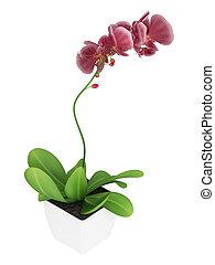 Purple phalaenopsis orchid - Beautiful spike of flowering...