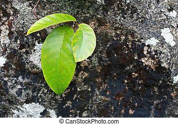 Fresh green leaf on stone
