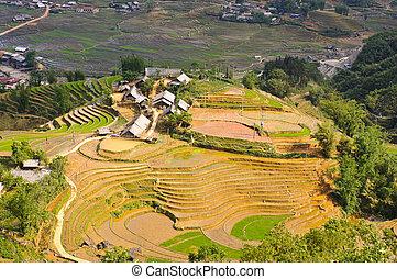 Sapa rice terraced fields - Rice terraced fields and Hmong...