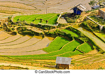 Hill tribe rice terraced fields in Sapa, Vietnam