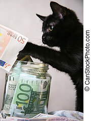 Money - The black kitten plays with money