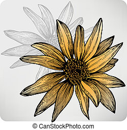 Flower sunflower, hand-drawing. Vector illustration.