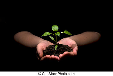 new life - Hands holding sapling in soil
