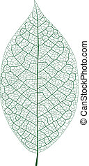 Leaf Vein - Layered Vector Illustration Of Leaf Vein.