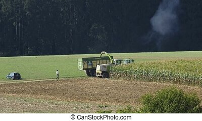 corn harvest with thresher