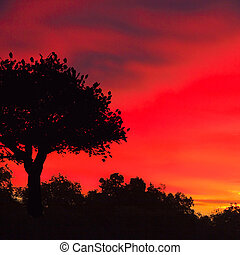 Red sky and single tree at down - Blck tree silhouette...