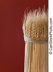 Sheaf of Wheat against a Red Background