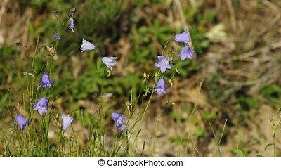 bell flower in soft wind
