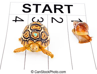 Speed Contest - a tortoise competing with a snail in a...