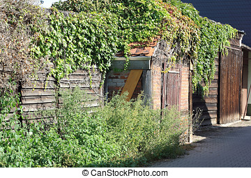 Shed overgrown with ivy - A shed, picturesquely overgrown...