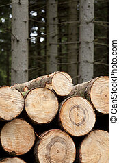 felled wood - felled stems of trees in coniferous forest