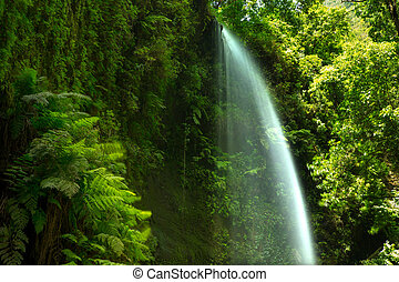 Los Tilos waterfall Laurisilva in La Palma laurel forest -...