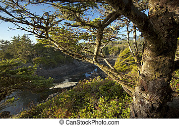 Tree on the Long Beach on Vancouver Island