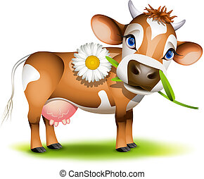 Little Jersey cow eating daisy