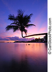 coconut tree twilight - coconut palm tree twilight at ko...