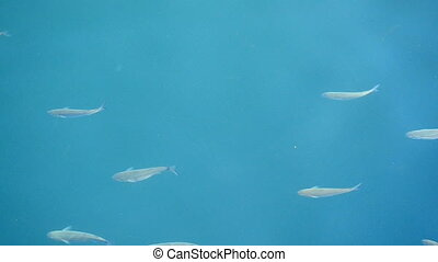 fish in the blue water of the sea