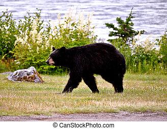 Juneau Bear