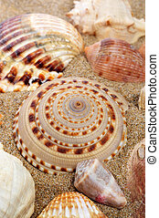seashells on the sand of a beach - closeup of some seashells...