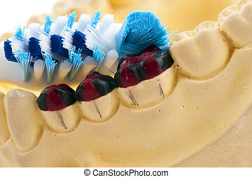 Casting of teeth model and toothbrush, Showing How to brush...