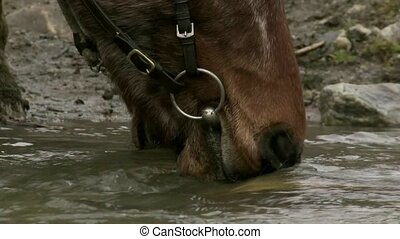 close up of horse drinking in alpin