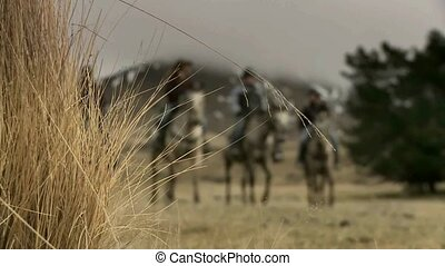 Shallow depth of field - Horse trek - Cadrona, New Zealand....