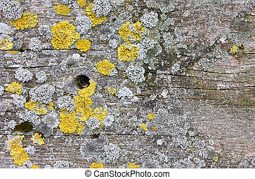 wood background with lichen - A photography of a wood...