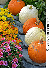 fall pumpkins and mums - Pumpkins and mums in a fall garden.