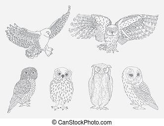 Owls - Collection of owls- six different examples