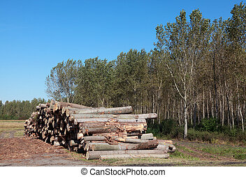 Lumber industry - Wood exploitation, heap of logs in forest