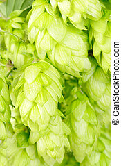 hop close-up nature background