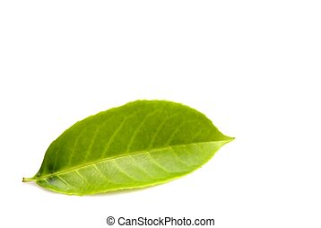 green leaf isolated over white