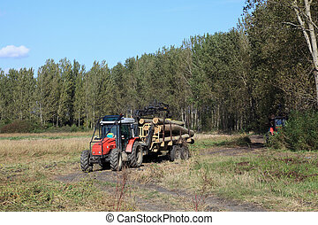 Lumber industry, transportation of cut wood with tractor