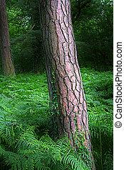 árvore, tronco, inglês, bosque, cercado, Ferns