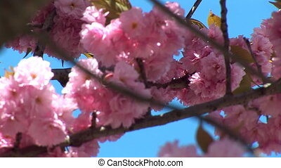 flowering tree b