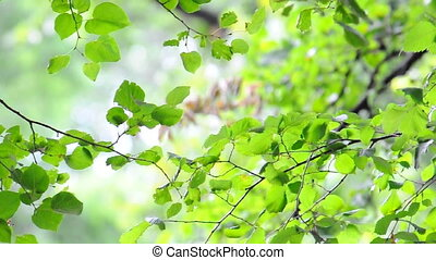 Bright Green Leaves