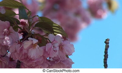 flowering tree c