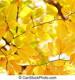 Background of bright yellow leaves