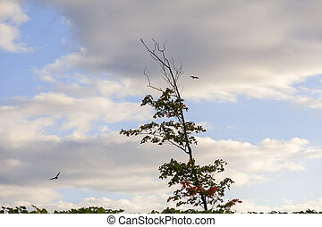one tree two birds flying around
