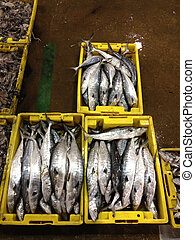 Fresh sea fishes in yellow boxes, Chinese mackerel