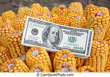 Corn concept - Agricultural concept, closeup of dollar...