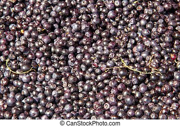 Blackcurrants  - Lots of Blackcurrants
