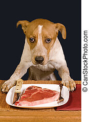 Dog Dinner Time. - Dog ready to eat a big steak.