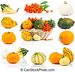 set of autumn pumpkins, isolated on the white background